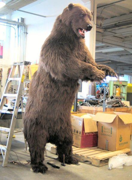 bear-final-01